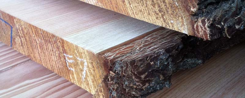 A Growing Logging and Timber Buying Company | About