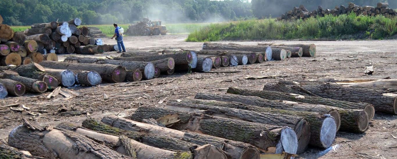 Logging Company and Standing Timber Buyer